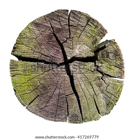 weathered tree trunk cross section, isolated on white, clipping path included - stock photo