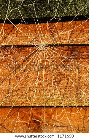 Web and shadow on a garden shed - stock photo