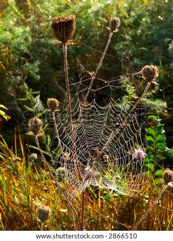 Web in the autumn - stock photo