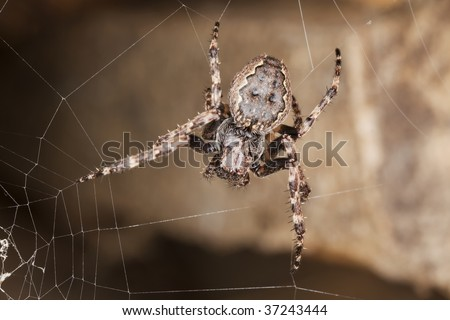 Web spider waiting for prey.