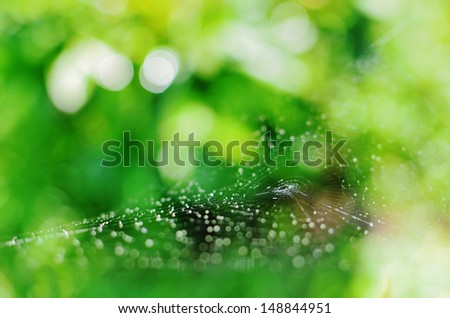 Web spun by the spider  - stock photo