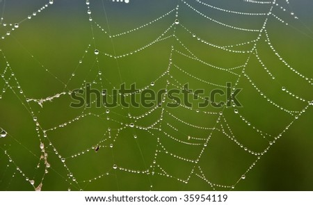 web with drops of dew - stock photo