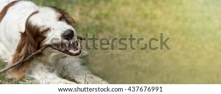 Website banner of a white dog as chewing a stick and showing teeth