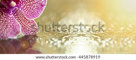 Website banner of pink orchid flower petals with copy space