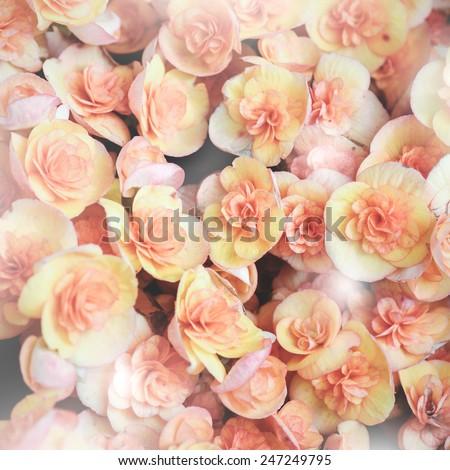 wedding bouquet  flowers background - stock photo