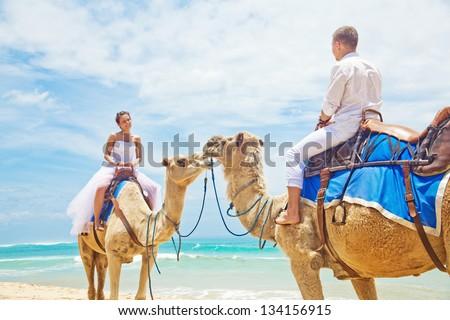 wedding camel ride - stock photo