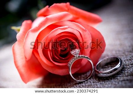 Wedding concept with roses and rings,Red fresh rose and gold wedding rings on white background. Space for your text,Set of Wedding Rings in Rose - stock photo