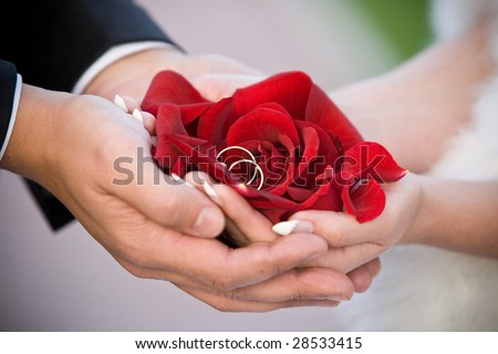wedding couple are holding rose petals and wedding rings in hands - stock photo