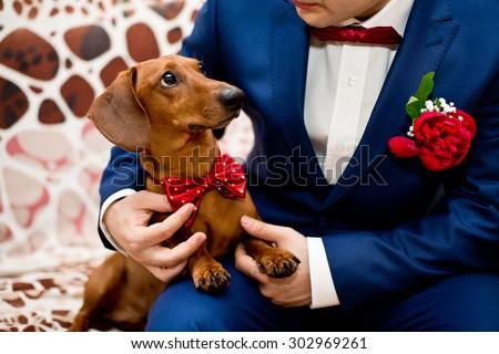 wedding dog - stock photo