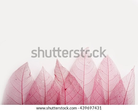 Wedding or romantic template with pink decorative leaves on white background