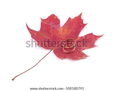 wedding rings and maple leaves on a white background