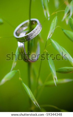 Wedding rings and rye - stock photo