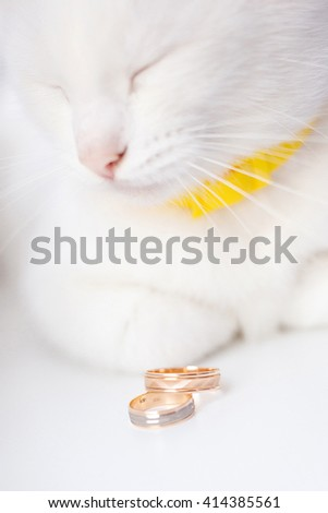 Wedding rings and sleeping cat in the background. - stock photo