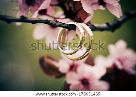 Wedding rings closeup with pink cherry flowers - stock photo