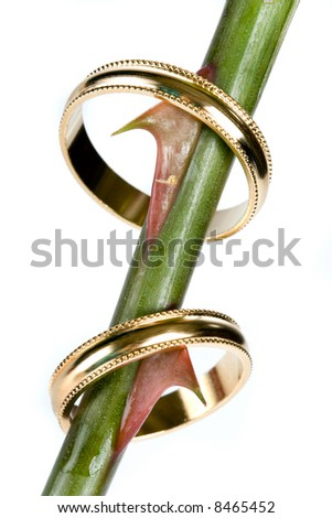 Wedding rings hanging on the thorns of a rose - stock photo