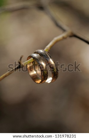 wedding rings hanging on tree's branch - stock photo
