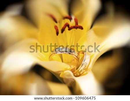 Wedding rings in the yellow flower - stock photo