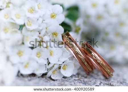 Wedding rings. Wedding rings and spring flower. Wedding rings and white flower. Wedding rings on white. - stock photo