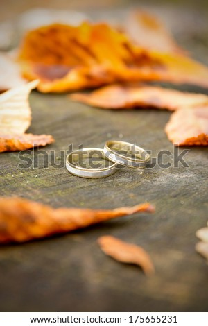 Wedding rings with golden autumn leaves  - stock photo