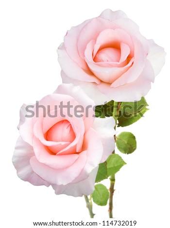 Wedding roses bunch isolated on white background - stock photo