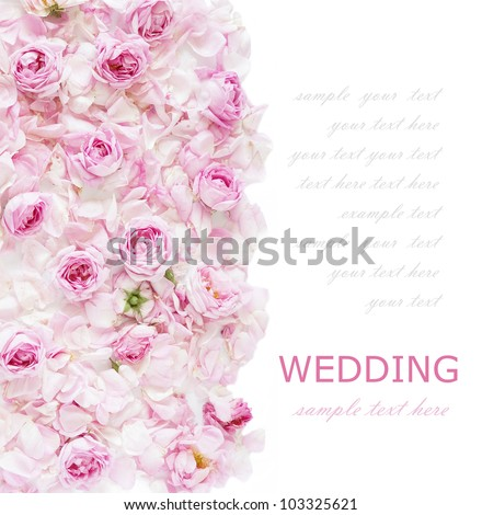 Wedding tea roses background isolated on white with sample text