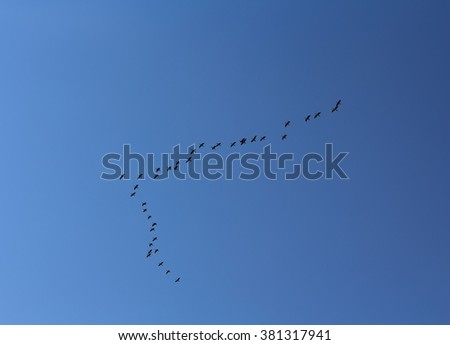 Wedge of birds flying against a blue sky. Animals - stock photo