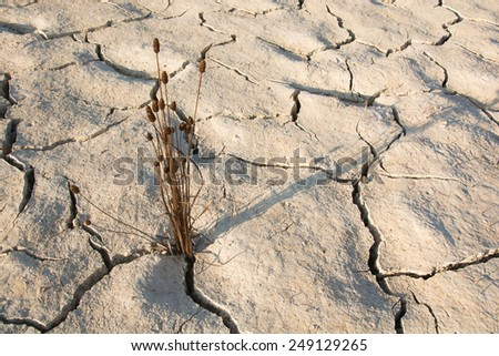 Weed drying and Dry soil in arid areas - stock photo