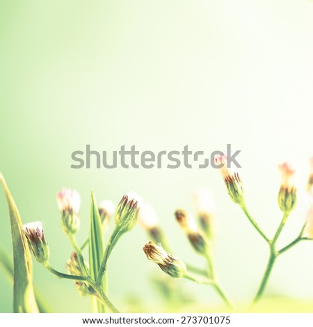 weed flowers in vintage color style