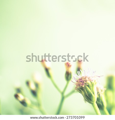 weed flowers in vintage color style - stock photo