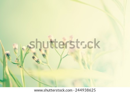 weed flowers in vintage color style for nature background
