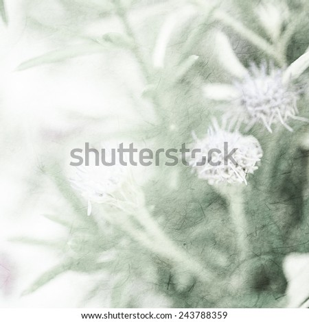 weed flowers in vintage color style on mulberry paper texture for background