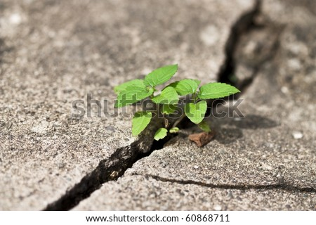 weed growing through crack in pavement - stock photo