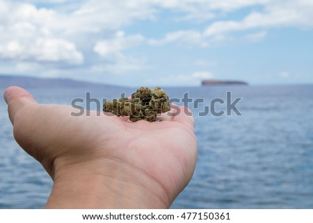 weed in the hand