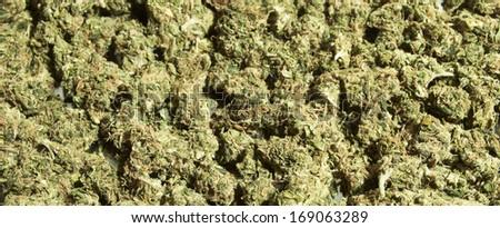Weed, Medical Marijuana Grunge Detail and Background - stock photo