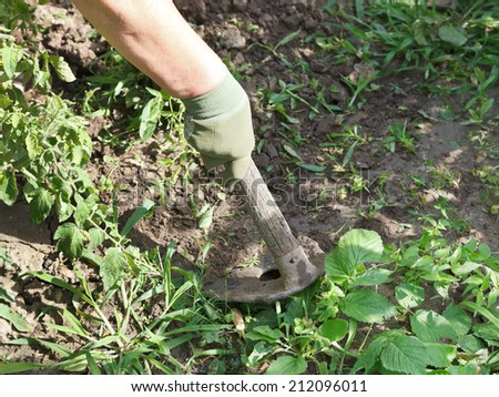 weeding grass in garden by hoe in summer day - stock photo