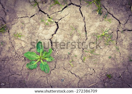 Weeds growing on dry cracked soil - stock photo