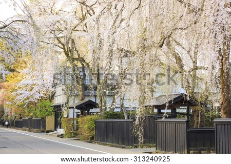 Weeping Cherries of Kakunodateâ??s Samurai District, Akita, Japan - stock photo