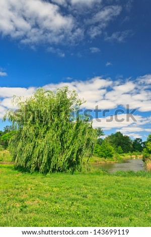 Weeping willow beside the lake under clouds and blue sky. - stock photo