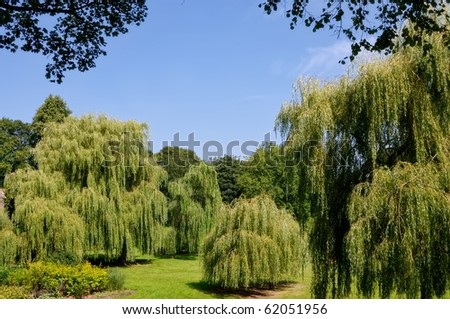 Weeping Willows in Bitts Park, Carlisle, Northern England - stock photo