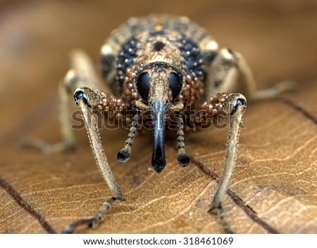 Weevil & Mites/Weevil & Mites/Weevil & Mites - stock photo