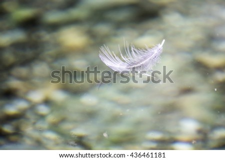 weightless white feather floating on the water surface