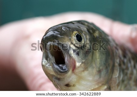 weird funny fish with his mouth open