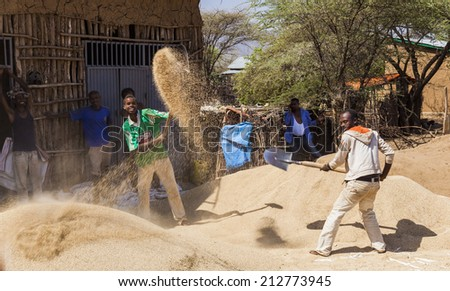 WEITA. OMO VALLEY. ETHIOPIA - DECEMBER 29, 2013: Unidentified men winnow crop with shovels on the wind. Tribes of Omo Valley still do their farming in traditional way. - stock photo