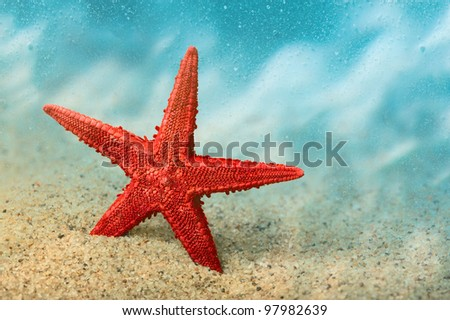 Welcome to the resort. Starfish on the clean golden sand in a welcoming gesture. Underwater. Macro. Copy space.