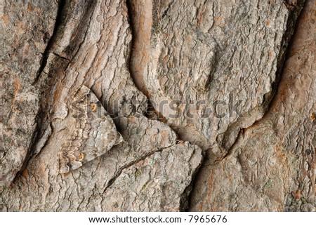 Well camouflaged moth on tree bark - stock photo