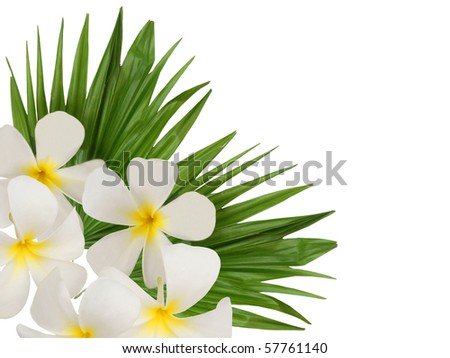 Wellness frangipani blooms frame - stock photo