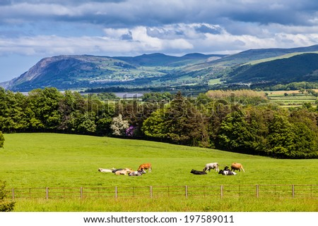 Welsh mountains with rolling dark clouds, Countryside, & Cows in the meadow - stock photo