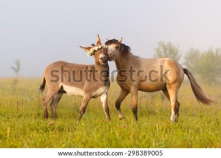 welsh pony and gray donkey - stock photo
