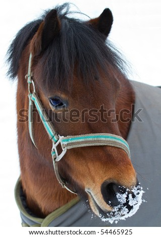 Welsh Pony in the snow - stock photo