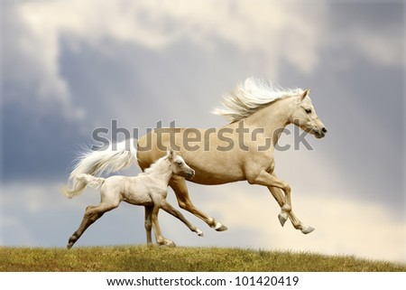 welsh pony mare and foal in field